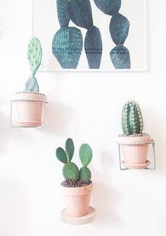 Hæng dine kaktusser på væggen