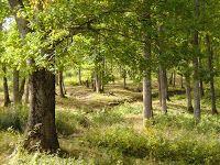Gombamánia: Négy védett gomba egy erdőben Plants, Plant, Planets