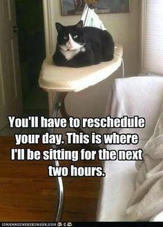 #cat #meme #lolcat