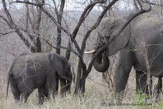 #Landscapes  #Animals #KrugerNationalPark #Kruger #KrugerNP #SouthAfrica #Safari #Travel #Elephants #Animallove