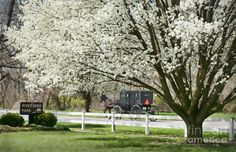 Gorgeous shot of our early blooms this year by David Arment, taken at Middlebury's Riverbend Park. Bravo!
