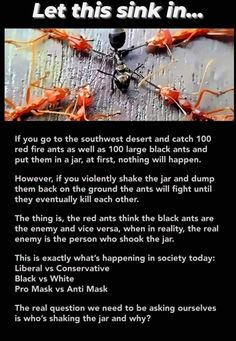 Large Black Ants, Things To Know, Things To Think About, Fire Ants, Political Quotes, Political Articles, The Thing Is, Truth Hurts, Thought Provoking