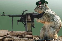 ifunny pics about the army | Funny Animal Army New Nice Photos/Images lol funny
