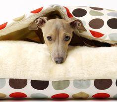 italian greyhound in the rooi & charley chau dotty chocolate
