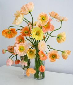 Studio Tour: Livia Cetti of The Green Vase Ikebana, My Flower, Beautiful Flowers, Cactus Flower, Exotic Flowers, Purple Flowers, Art Floral Japonais, Design Floral, Ranunculus