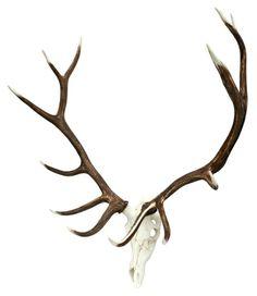 Add a unique, rustic piece to your home or cabin with this beautiful Elk European Mount from Cast Horn Designs! Elk Horns, Elk Antlers, European Elk Mount, Rustic Wall Sculptures, Deer Antler Chandelier, Dining Chandelier, Wheel Chandelier, Chandeliers, Elk Skull