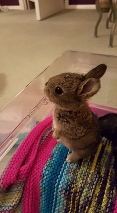case you are searching for a furry companion that is not only extremely cute, but very easy to keep, then look no further than a family pet rabbit. Cute Baby Bunnies, Funny Bunnies, Cute Babies, Funny Cats, Cute Little Animals, Cute Funny Animals, Pet Rabbit, House Rabbit, Tier Fotos