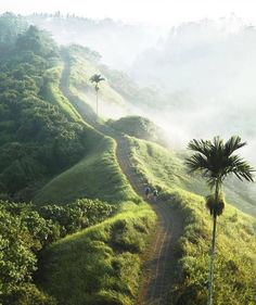 Ultimate Travel Guide: Be One with Bali Ubud, Wonderful Places, Beautiful Places, Places To Travel, Places To Visit, Bali Holidays, Road Trip, Scenic Photography, Bali Travel