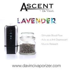 Vape peppermint with the ascent vaporizer