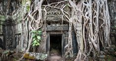 Angkor Wat Cambodia. Ta Prom Khmer ancient Buddhist temple in jungle forest. Famous landmark, place of worship and popular tourist travel destination in Asia. photo