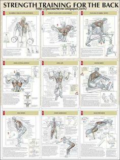 Strength training for back