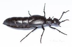 Google Image Result for http://bugs.adrianthysse.com/wp-content/uploads/2012/08/Grasslands-4300.jpg
