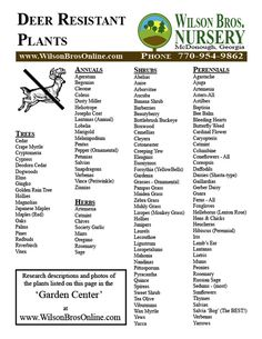 Deer Resistant Plants.... now the task of finding out if there are any on the list P.M.L deer wont eat!