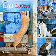 """Cat Calendar 2018 """"Cat Lovers"""" Eco-friendly 2018 Large Wall Calendar - x (Open) - Thick & Sturdy Paper - Purrfect for Cat Lovers Large Wall Calendar, Cat Calendar, Cat Lover Gifts, Cat Gifts, Cat Lovers, Brown Trout, Online Gifts, Maine Coon, Cats"""