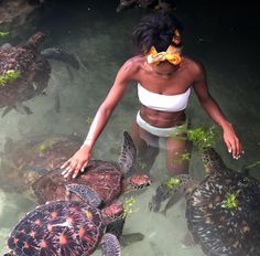 Have you ever dreamt of feeding sea turtles in Zanzibar? Well, we got you! Check out the link in the bio to see the details of our… Animal Experiences, Visual Aesthetics, Victoria Falls, Travel Reviews, Girls Swimming, Black Girl Aesthetic, Afro Punk, World Photo, Island Girl