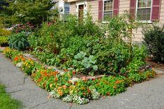 frontyard vegetable gardens | Front Yard Vegetable Gardens