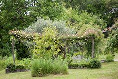 Mediterranean roses garden Racconti per immagini :: Il giardino delle rose di Britta