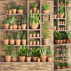 Clay Pots For Plants. Taking the whole plant inside our house is actually sort of ideal because these types of living plants can add the refreshing am. Cacti And Succulents, Potted Plants, Indoor Plants, Plant Wall Decor, House Plants Decor, Planting In Clay, Garden Center Displays, Decoration Plante, Room With Plants