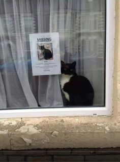 Missing cat doesn't look like it's missing