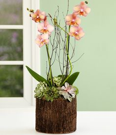 potted orchid centerpiece - Google Search