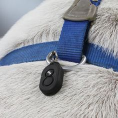 Pet Locator (or use for your children and even clip to your keychain if you lose your keys a lot.) - works to a range of up to 600 feet.  Very cool.  $69.99.