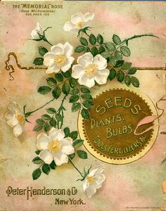 """Seed catalogue cover art ~ featuring the """"Memorial"""" white rose."""