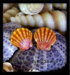 Deep Peach Hawaiian Sunrise Shells Sterling Silver Post Earrings Deeply colored peach and beautifully matched Hawaiian Sunrise Shells make for an amazing pair of sterling silver post earrings! Each shell is pristine in shape and perfect condition! Slightly larger shells at 3/4 inch each, you will surely catch more than a few compliments with these earrings! Wear them to work, on the beach, in the ocean surf or out on the town, and prepare for lots of attention with this rare seashell jewelry...