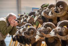 Seorang pengunjung memotret tropi-tropi yang ditampilkan dalam pameran perdagangan Reiten-Jagen-Fischen (Menunggang-Berburu-Memancing) di Erfurt, Jerman Timur.