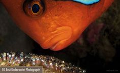 25 Incredible Award Winning Underwater Photography examples for your inspiration http://webneel.com/25-incredible-award-winning-underwater-photography-examples-your-inspiration | Design Inspiration http://webneel.com | Follow us www.pinterest.com/webneel