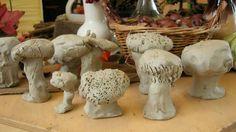 Op een grote, kleine, dikke, brede, smalle, lange, dunne….... paddenstoel | lesidee | groep 1-2 | Laat maar Leren