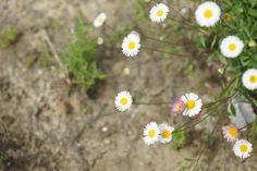 お花たち(2015年5月) Plants, Plant, Planets