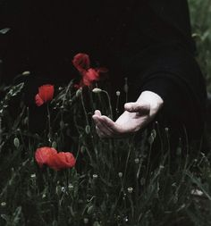"""""""Moreover, through the dancing poppies stole/a breeze, most softly lulling to my soul"""" Endymion, Keats"""