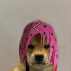 Dog Icon, Jojo Anime, Anime Group, Jojo Memes, Jojo Bizzare Adventure, Twisted Humor, Shiba Inu, Jojo Bizarre, Haikyuu
