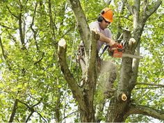 Honolulu Tree Service, serving Oahu for over 10 years with Insured, Certified Arborist on Staff. Please feel free to call for information regarging any of the services tree trimming honolulu hi proudly offer.