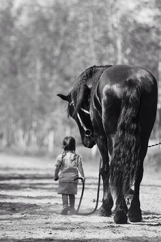 Horses are one of the great friends and guardians in the world.