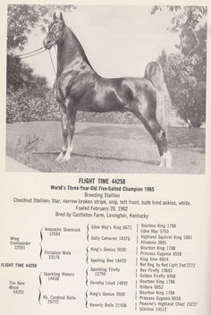 The greatest dynasty in American Saddlebred history came to a close on July 8 th , 1975 when Dodge Stables held its dispersal sale. Giraffe Neck, Tennessee Walking Horse, Morgan Horse, American Saddlebred, Appaloosa Horses, Horse Trailers, Horse Saddles, Horse Breeds, Horse Art