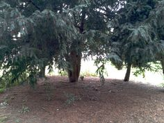 Humberstone Park, Leicester, England, 21/09/13