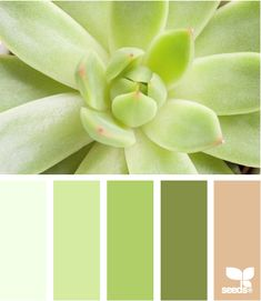 Succulent glow ... if I used green and lavender tones, plus soft/pastel pink, with the peach below, that could really work in my house...