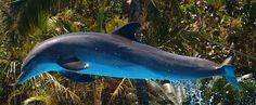 Delfin im Sprung Image, Dolphins, Reflex Camera, Animales