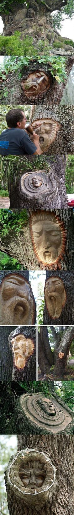 I'm pretty sure the first pic is a fake tree from Animal Kingdom, but the other with faces carved into trees are pretty awesome.
