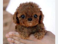 BABYpuppy aww