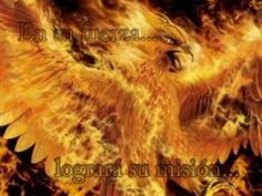 dragones y el ave fenix.wmv - YouTube