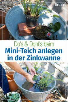 Create mini rain- Miniteich anlegen How to create a water garden for the balcony: We show you step by step how to create a mini-pond and optimally plant the zinc tub. Garden Care, Water Garden, Garden Pots, Balcony Gardening, Rain Garden, Mini Pond, Potager Bio, Comment Planter, Lawn Edging