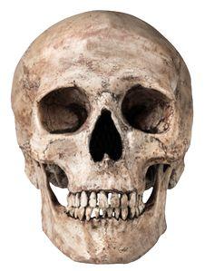 Skull Png Image PNG Image