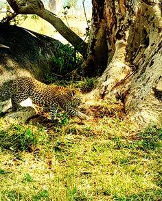 Gosheni Safaris (@gosheni_safaris) | Twitter Arusha, African Safari, Tanzania, Wildlife, Tours, Twitter, Animals, Animales, Animaux