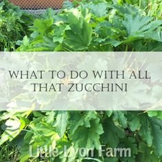 My Little Lyon Farm- great ways to make use of all the awesome zucchini coming in your door!!