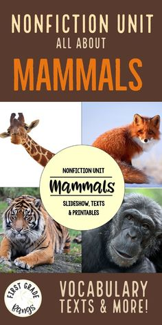 Facts about mammals