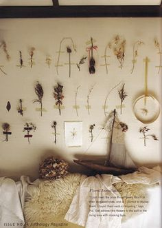 specimens taped to wall.