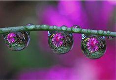 花のマクロ写真30