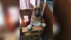 Dog was born different, so he has to eat in a special chair! For the love of animals. Pass it on.